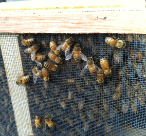 bees on outside of the box